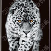B&W Cat Image 1