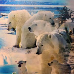 Polar Bears Image 1